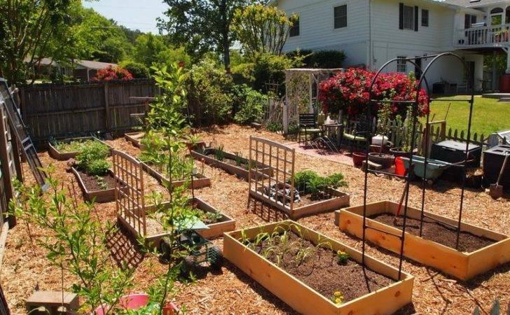 Garden Backyard Vegetable Ideas Design