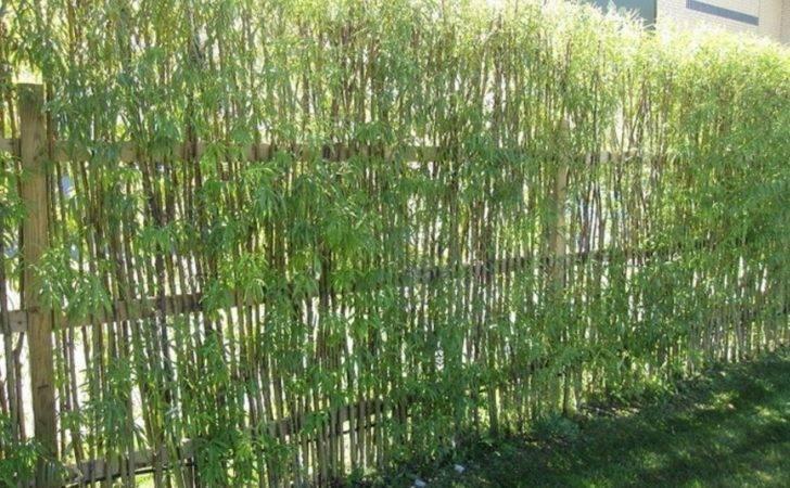 Garden Bamboo Fencing Ideas Interior Exterior Doors Design