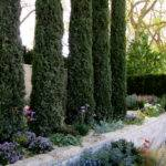 Garden Design Cypress Trees Flickr Sharing