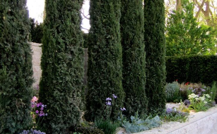 Garden Design Cypress Trees Flickr Sharing
