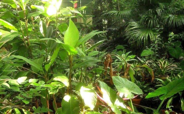 Garden Design Tropical Backyard