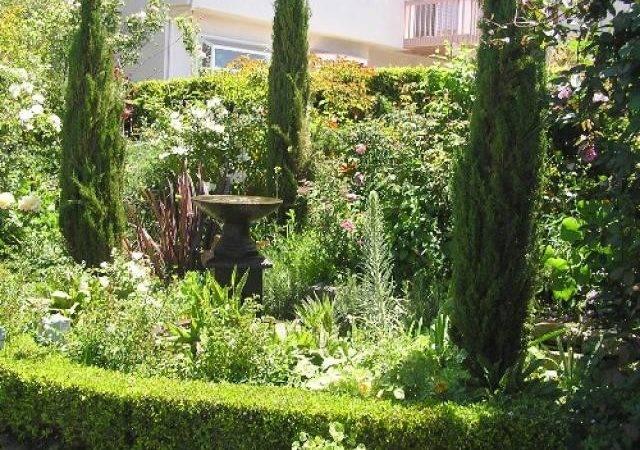 Garden Fence Leylandii Cupressocyparis Hedge