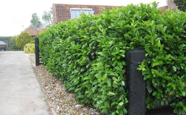 Garden Hedges Ideas Green Plants Beautify Your House
