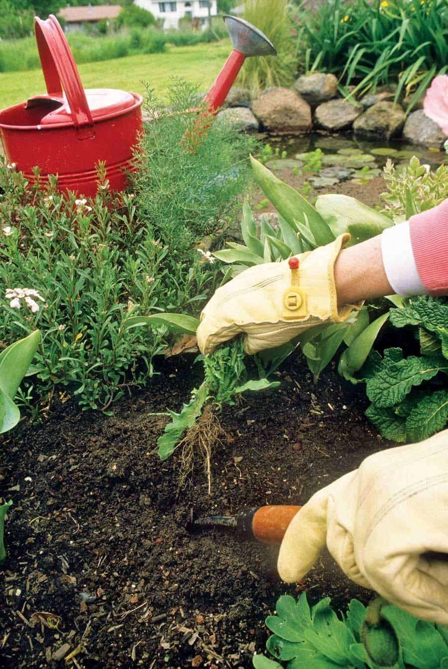 Garden Maintenance Methods Keep Weeds Under Control