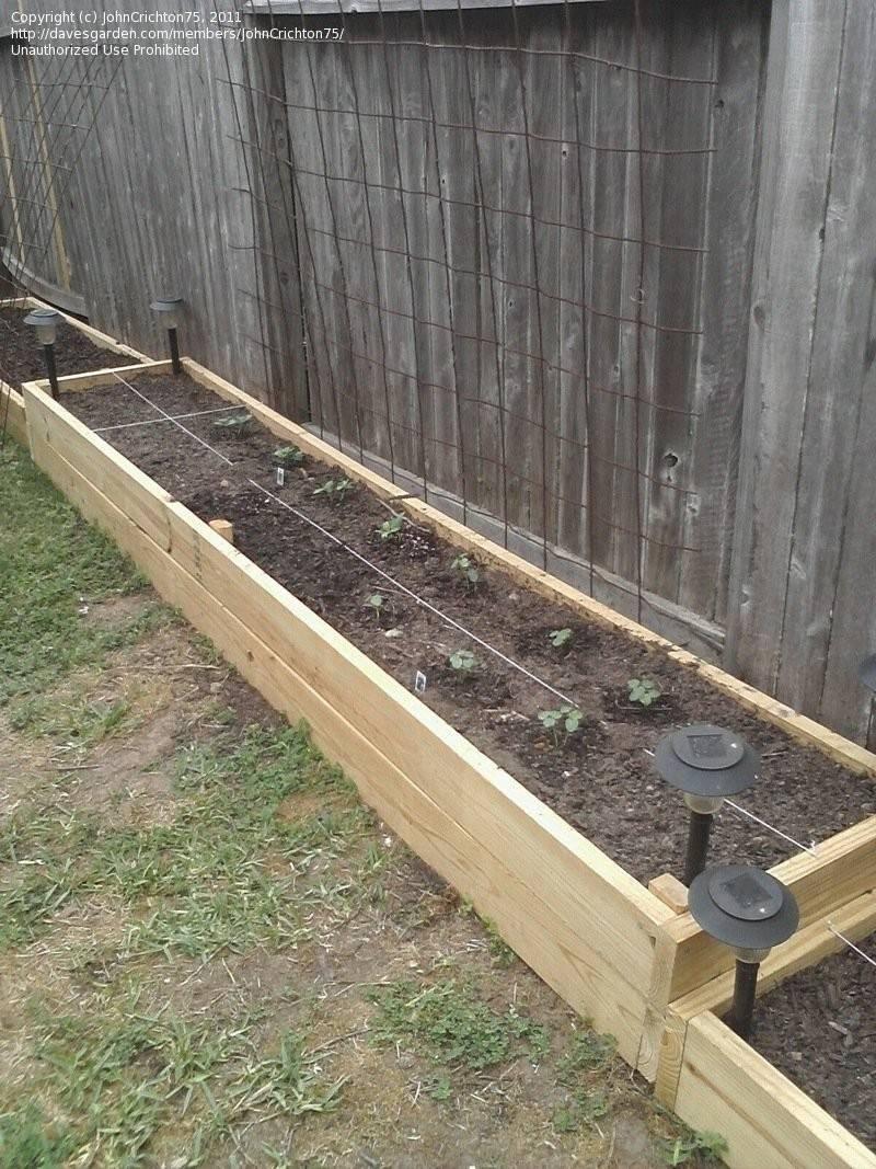 Gardening Johncrichton Raised Bed Along Fence Line Ideas