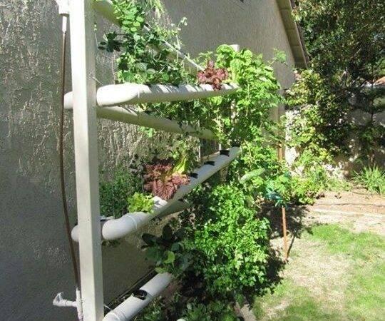 Gardens Outdoor Vertical Spaces Earth Pvc