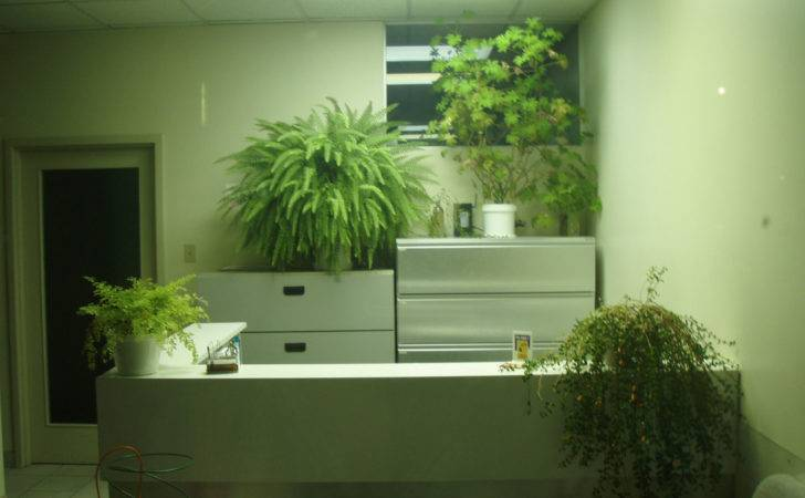 Get Facts Interior Plants Benefit Employees Office