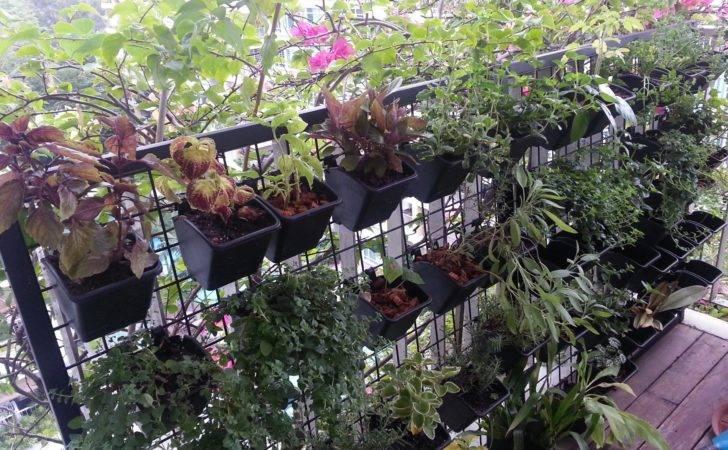 Get Taller Land Scare Singapore Gardens Growing Upwards