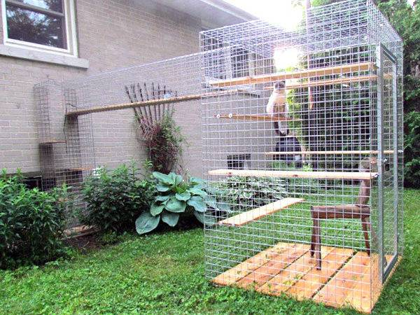 Give Your Feline Friend Safe Access Outdoors Catio