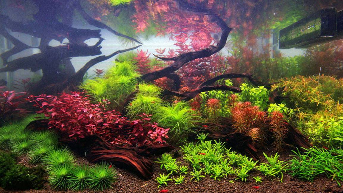 Going Dutch Intricate Beauty Style Aquariums