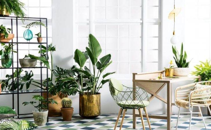 Golden Rules Styling Indoor Plants