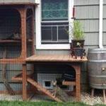 Good Compromise Indoor Outdoor Cat Debate Oregonlive