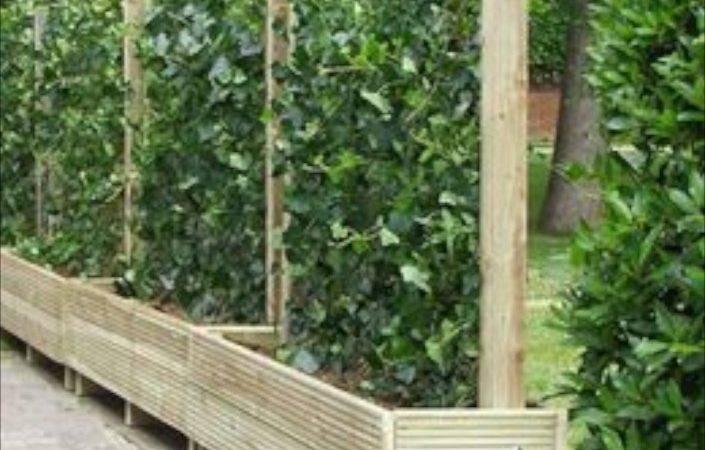 Green Fence Designs Plants Beautify Garden Design Yard