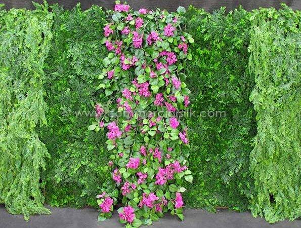 Green Wall Plants Related Keywords Suggestions