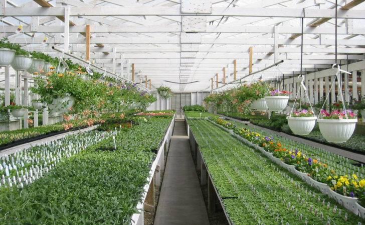 Greenhouse Layout Ideas Bing