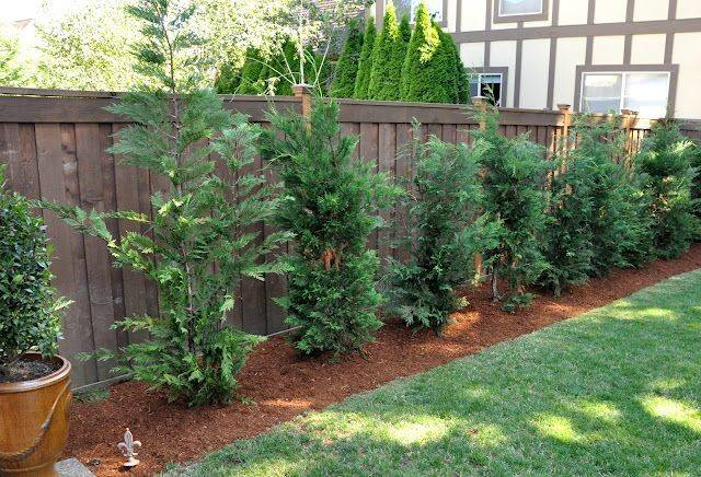Grow Like Weeds Looking Great Tree Privacy