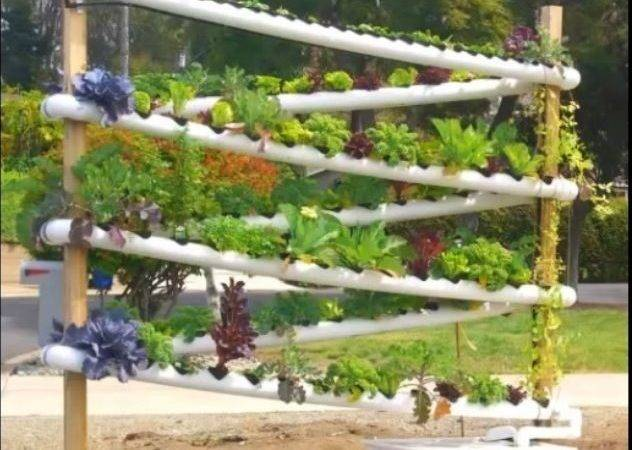 Growing Hydroponics Gardens Aquaponics System