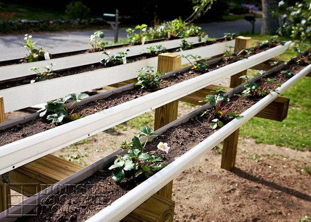 Gutter Gardening Strawberries Garden Ftempo