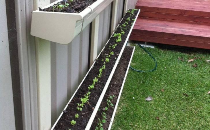 Gutter Gardens Sustainably