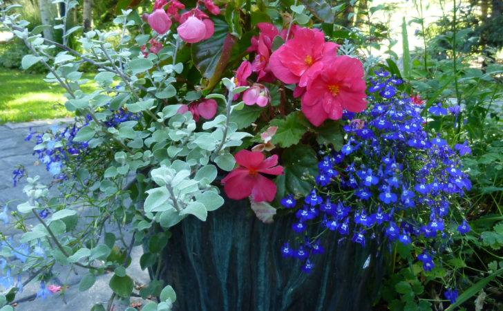 Hanging Planters Decks Porches Yards Special Occasion