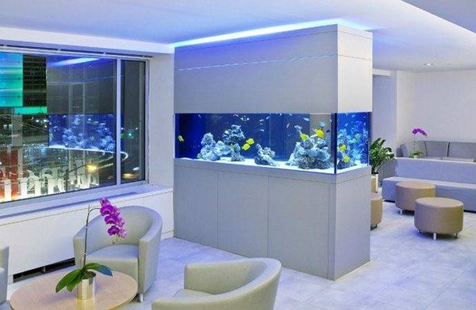 Have Aquarium Your Home Office Does Calming
