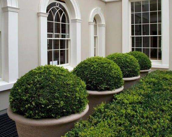 Have Awesome Artificial Boxwood Balls Faux Hedge Panels