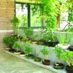 Herbal Gardens Urban Homes City Buzz