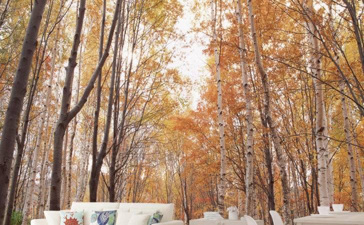 High Quality Modern Desgin Forest Path Large