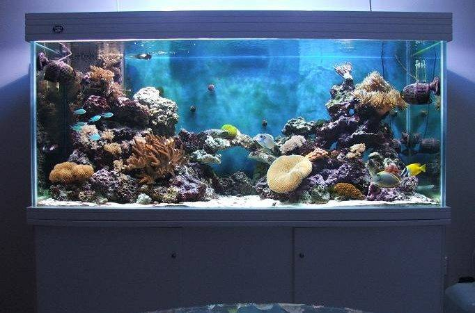 Hole Wall Tropical Fish Tank Keeping Aquarium