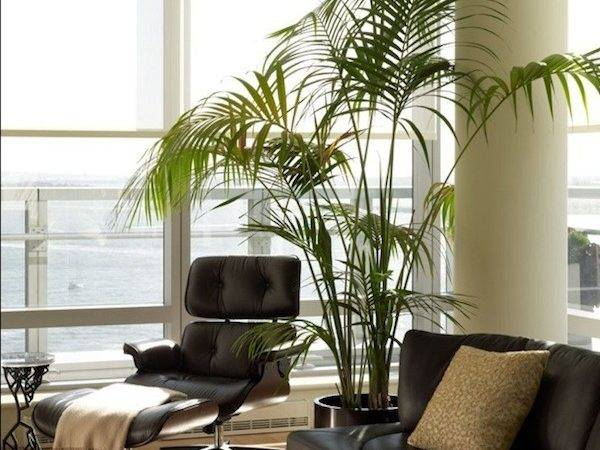 Home Interiors Plants Sitting Area