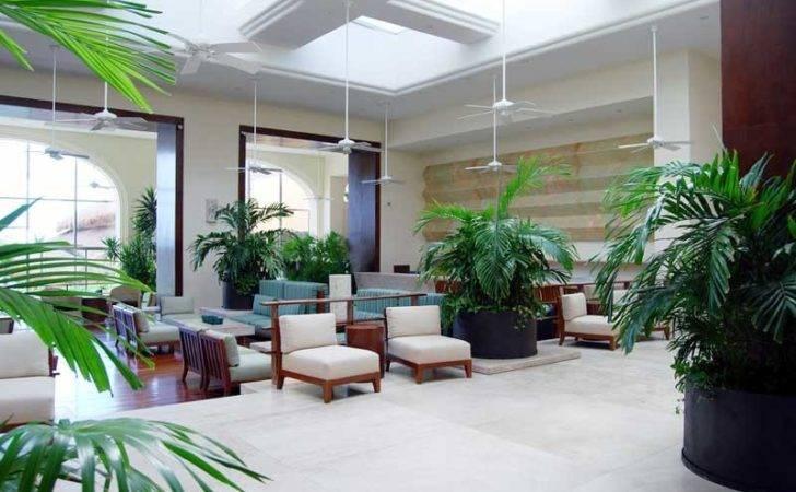 Hotel Lobby Indoor Plants Lobbies Patio Terrace Forward