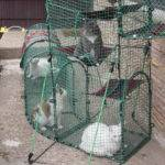 House Outdoor Cat Enclosures Becoming More