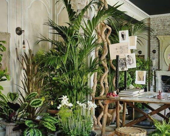 House Plant Heaven Colourful Nook Interior Jungle Urban