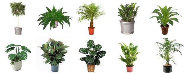 House Plants Natural Way Improve Indoor Air Quality