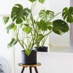 House Plants Pinterest Indoor