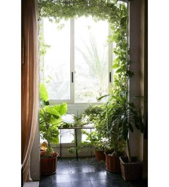 Ideas Indoor Plants Modern Interior Decorating Eco Style