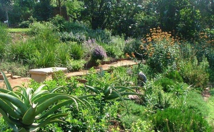 Indigenous South African Garden Google Search Ideas