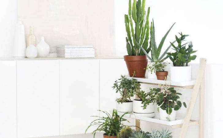 Indoor Garden Including Wall Mounted Ceiling Hung Plants
