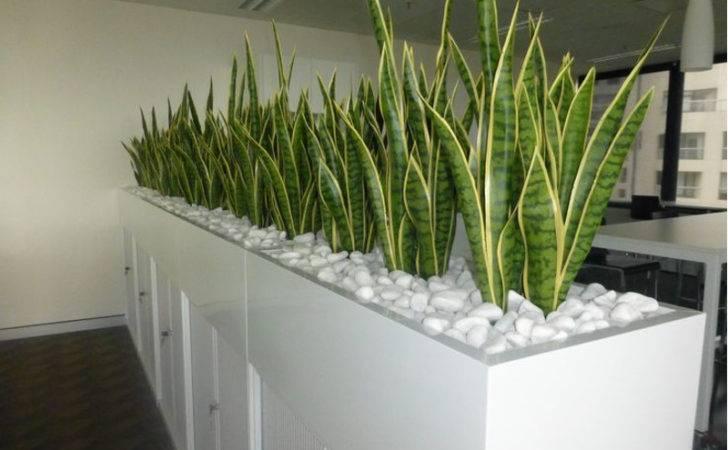 Indoor Office Plants Hire Melbourne Inscape Plant
