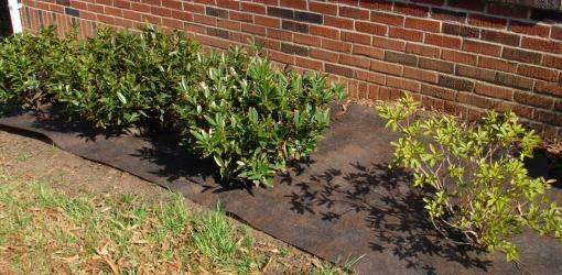 Install Landscape Fabric Plastic Today Homeowner