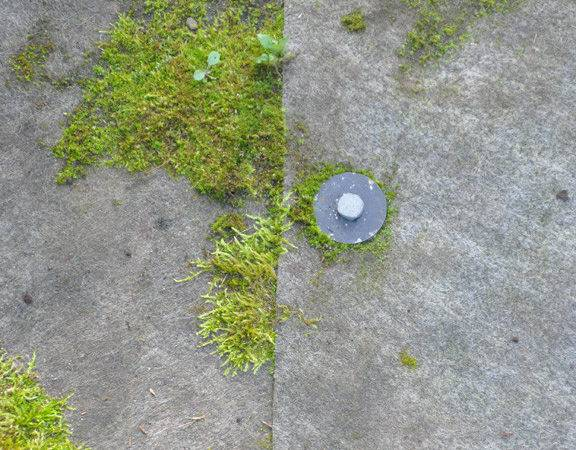 Install Landscape Fabric