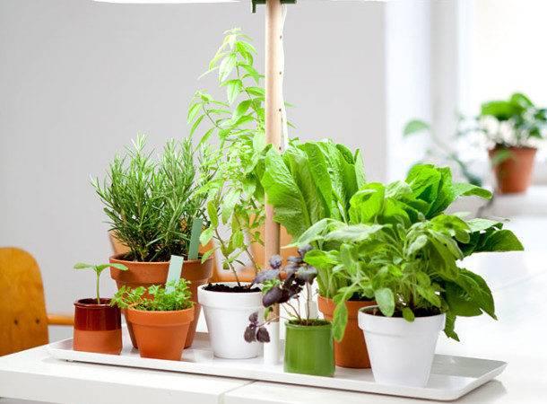 Interior Decorating Small Indoor Plant Aida Homes