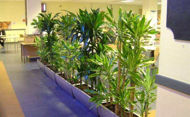 Interior Office Plants Hire Landscaping Plant
