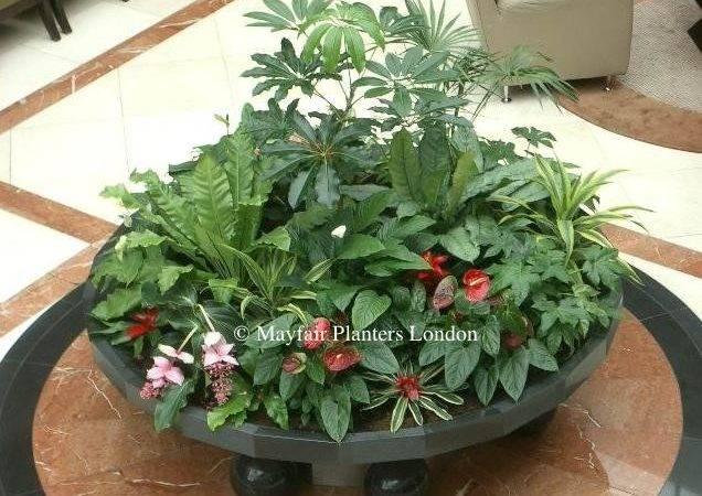 Interior Plants Custom Built Planter