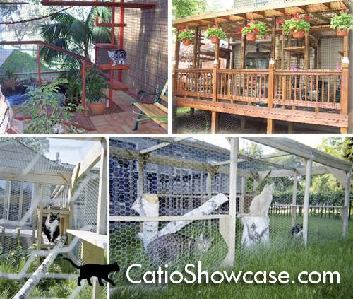 Introducing Catio Showcase Moderncat Cat Products Toys