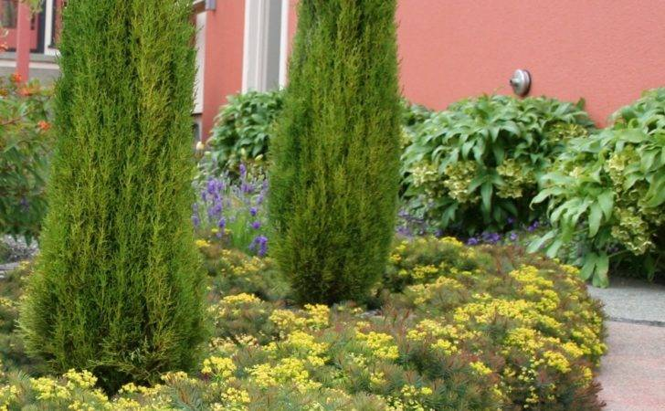 Italian Cypress Garden Ideas Pinterest