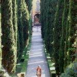 Italian Cypress Trees Landscaping Ideas Pinterest