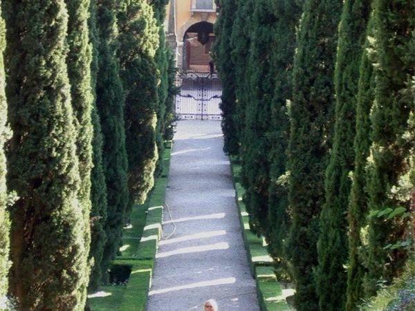 Italian Cypress Trees Landscaping Ideas Pinterest