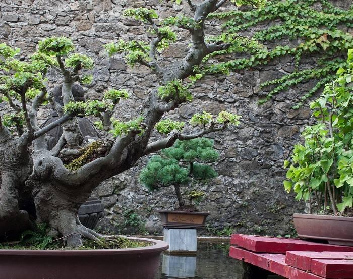 Japanese Style Gardens Differs Rock Garden Zen