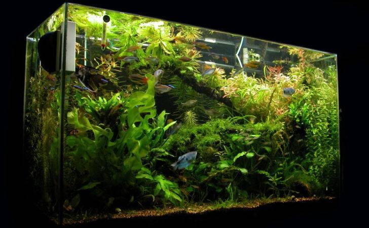 Jims Exotic Fish Freshwater Saltwater New Aquariums